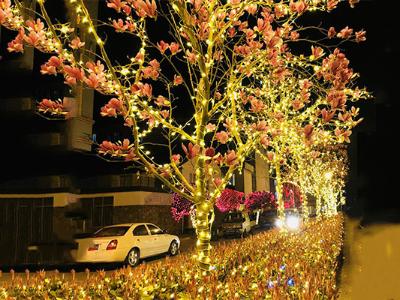 树木灯光亮化