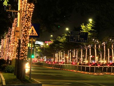 树木亮化设计-领略不一样的夜游体验